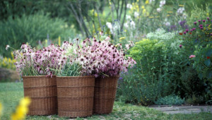 Dr.Hauschka Tuin met heilzame planten