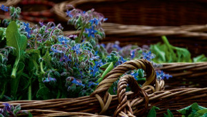 Dr.Hauschka Lexicon van heilzame planten